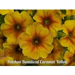 Петхоа Beautical Caramel Yellow