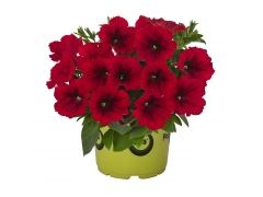 Петуния Potunia Plus Red (16 шт. по 52 руб.)