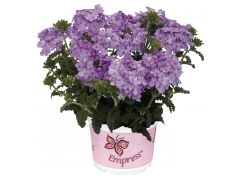 Вербена Empress Flair Lavender Blue (16 шт.)