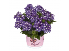 Вербена Empress Flair Purple Charme (16 шт.)